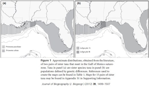 Distributions of sister taxa within the northern Gulf of Mexico