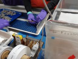 Measuring squid