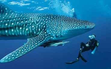 maldivespillowtalk_3259740a-large