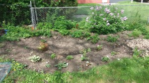 Before heading out to sea, I worked on getting a rain garden planted.