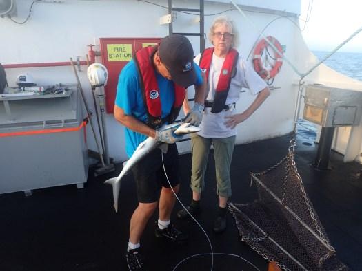 Stephen removes shark
