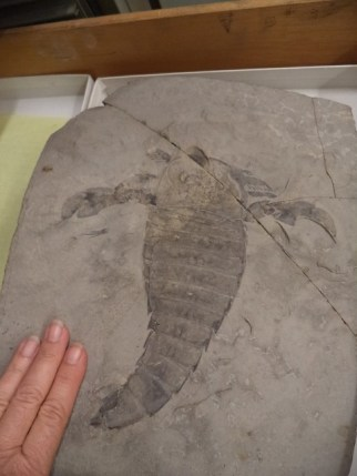 New York state fossil
