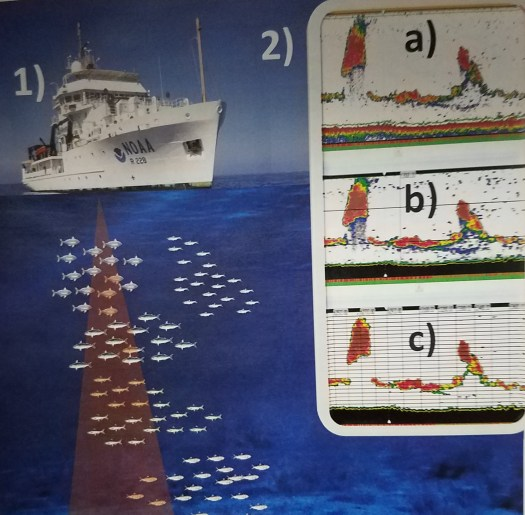 Diagram of sonar swath