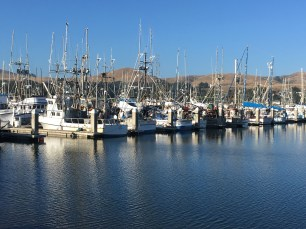 Fishing trawlers at Spud Point marina