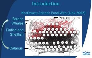 food web slide