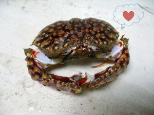 Bashful crab
