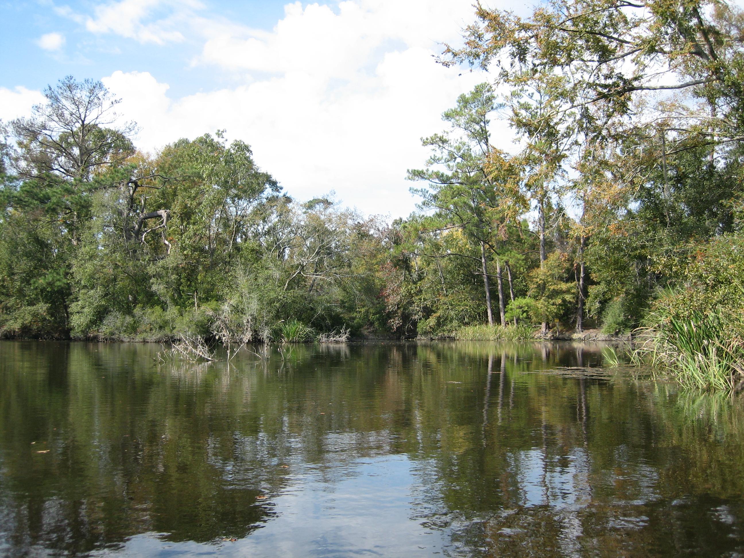 bayou1