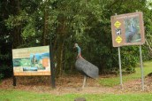 Cassowary are huge birds that are common in this area. This statue is life-size!!