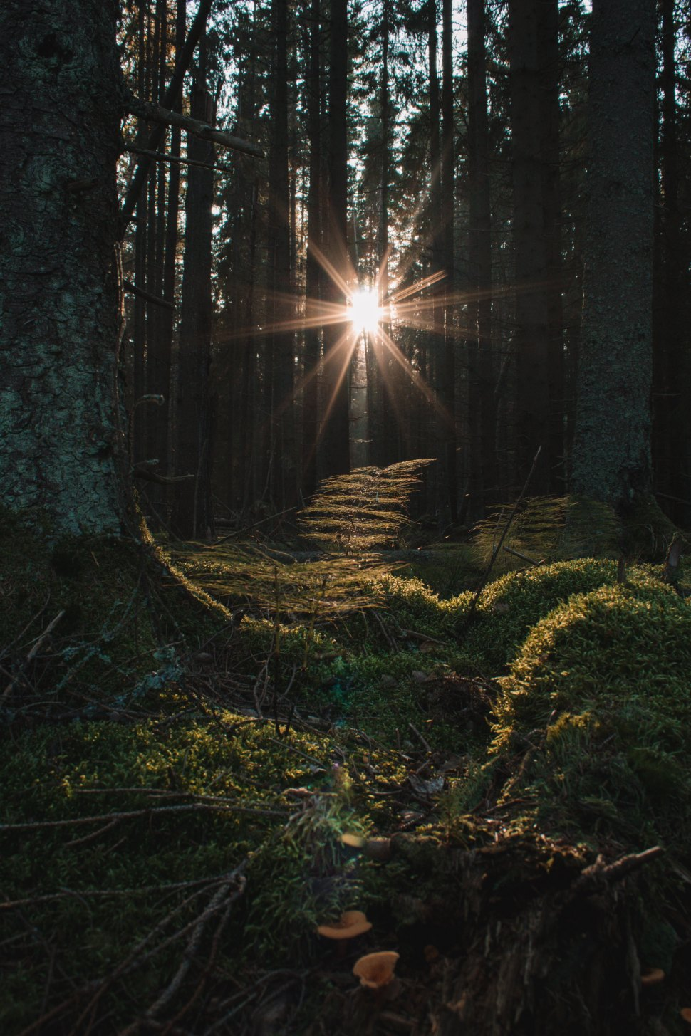 guillaume-briard-sunrise forrest -unsplash