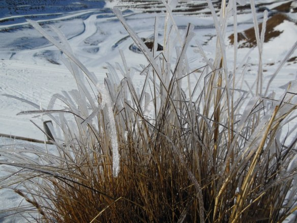 Icy Grass in New Zealand