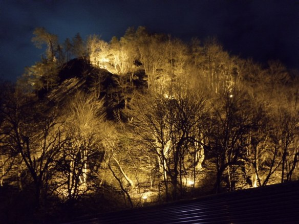 Lit Trees In Sochi, Russia