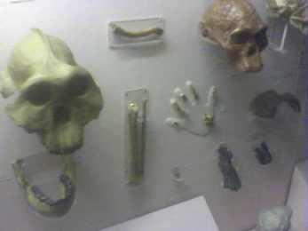 Horniman museum (14)