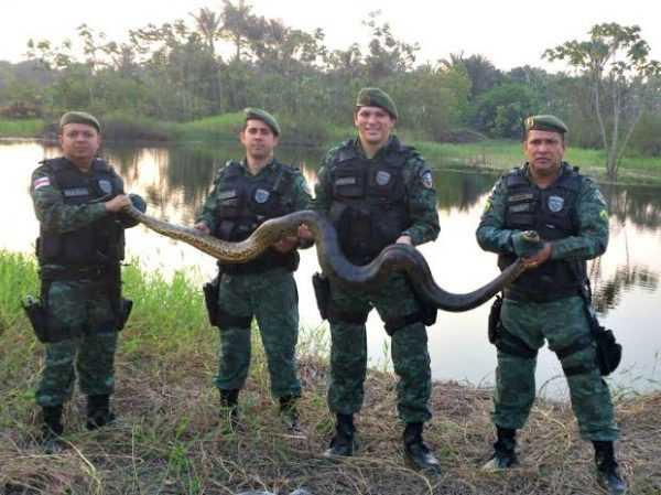 Os comunitários acionaram o Batalhão Ambiental para fazer o resgate (Foto: Batalhão Ambiental)