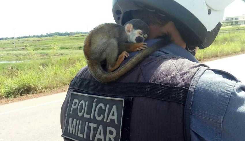 A polícia suspeita que o macaco estava sendo mantido em cativeiro – Divulgação/PM