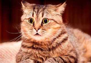 Lindo gatinho assustado / Foto: Divulgação