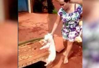 Mulher joga cachorro dentro de bueiro em Novo Gama Goiás (Foto: Reprodução/TV Anhanguera)