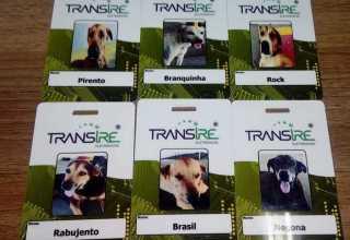 Pirento, Branquinha, Rock, Rabujento, Brasil e Negona viviam nas ruas, mas foram adotados pelos donos da Transire. / Foto : Reprodução Blog Mario Adolfo
