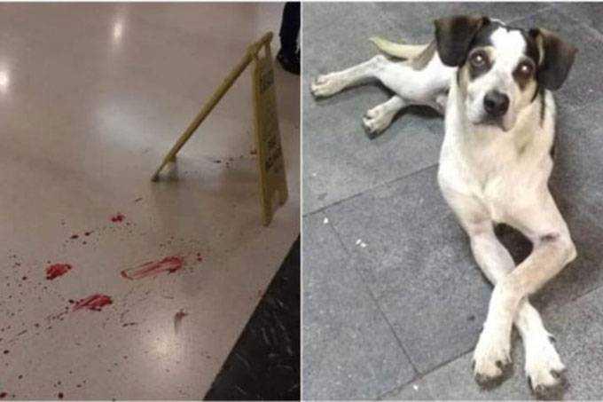 O cãozinho Manchinha foi envenenado e morto a pauladas por segurança de uma rede de supermercados, em São Paulo, no último dia 28 de novembro. / Foto: Reprodução/Facebook