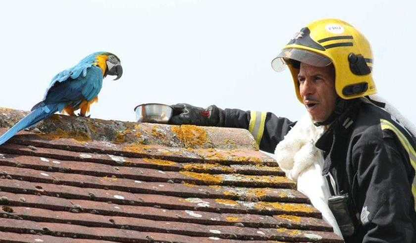 """Arara boca suja manda bombeiro """"se fu"""" enquanto ele tentava resgatá-la"""