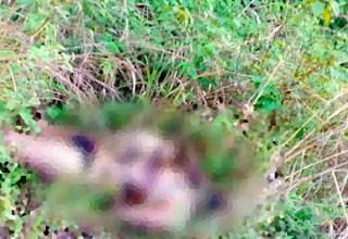 Cadáver com as vísceras expostas foi encontrado na tarde de domingo no Distrito Industrial II