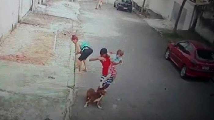 Jovem defende criança de ataque de Pitbull