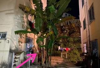 Por causa de bananeira vizinho mata o outro a facadas em Manaus!