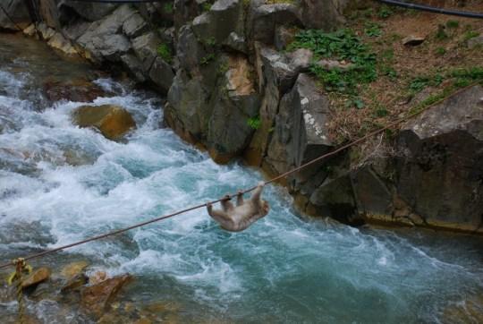 Snow Monkey Park - Japan Itinerary