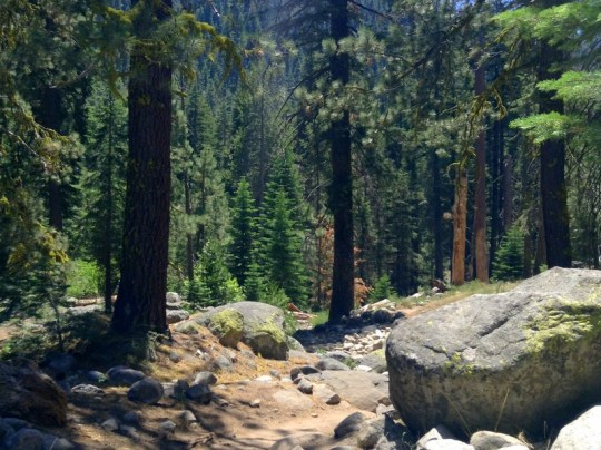 Visiting Sequoia National Park in One Day - Tokopah Falls Trail
