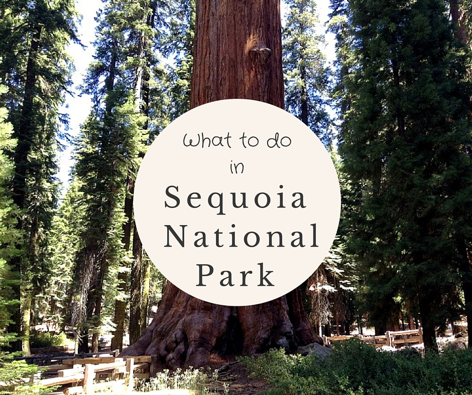 What To Do In Sequoia National Park In One Day - No Back Home-8023