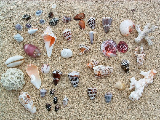 Shell collection in Fiji