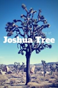 Family Friendly Hikes at Joshua Tree