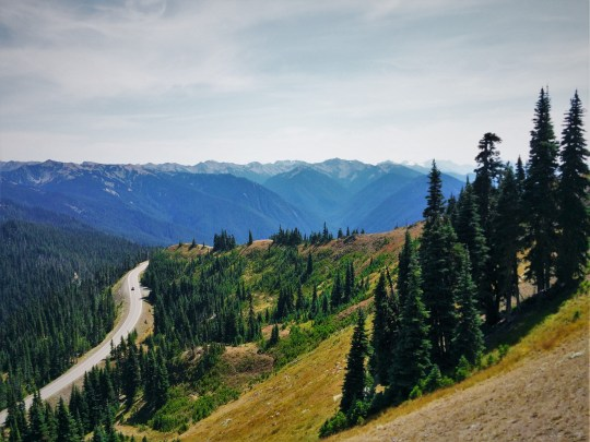 Road to Hurrican Ridge 1 - Olympic National Park
