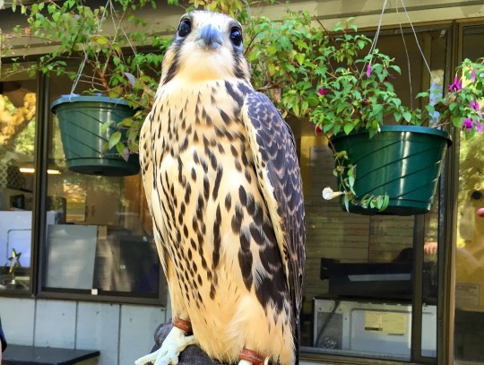 Cascades Raptor Center - Oregon Road Trip Itinerary