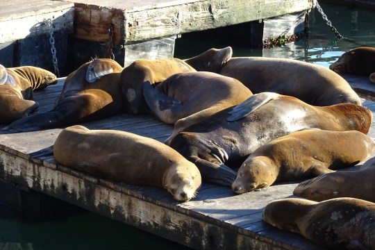 Top Things to do at Fisherman's Wharf include Pier 39 attractions like the sea lions