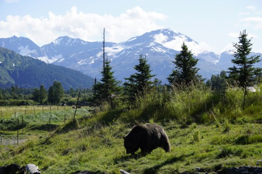 Alaska road trip with Thrifty Rental Car -Alaska Conservation Center