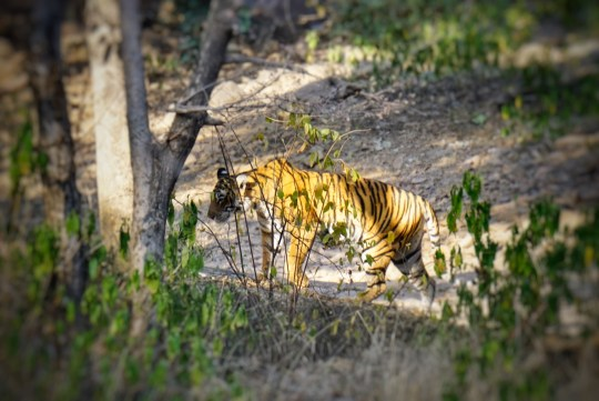 Palace on Wheels Itinerary - Ranthambore