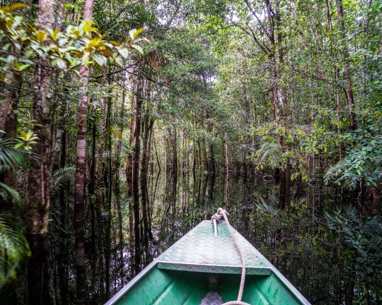 River explorations on an Amazon River Cruise with kids