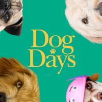 dogdays_profile