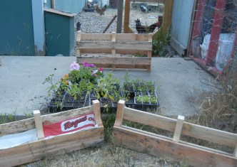 One pallet cut into 3 planters.