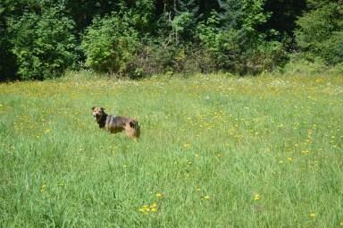 shasta meadow2