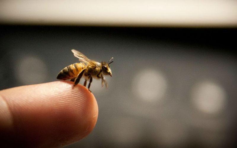 Возможные последствия пчелиного укуса