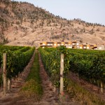 Estate Winery Tours
