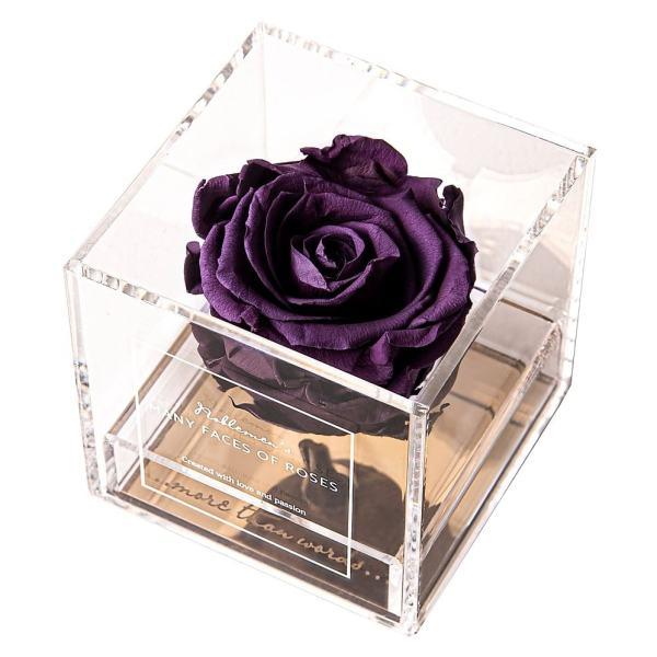 rose-dark-violet