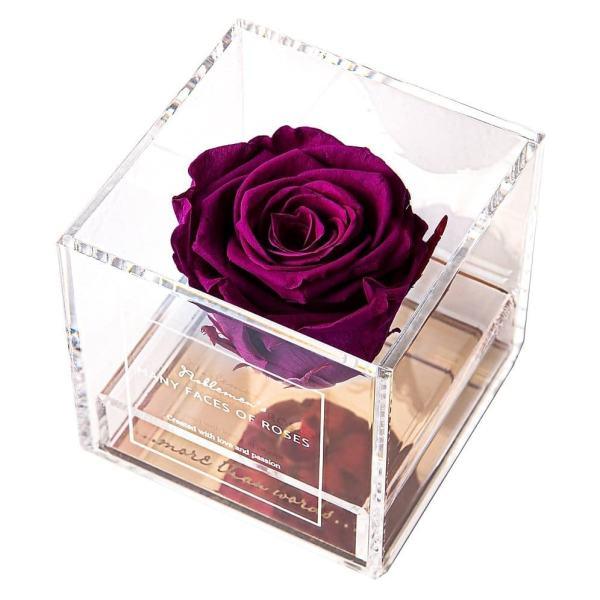 róża-morwa