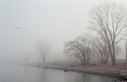 foggy-dew-ii.jpg