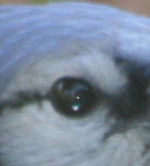 birds-eye.jpg