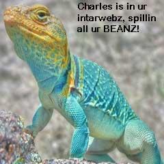 lol-lizard.jpg