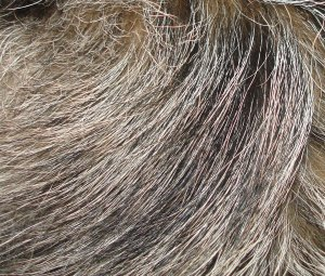 Kasey-Fur