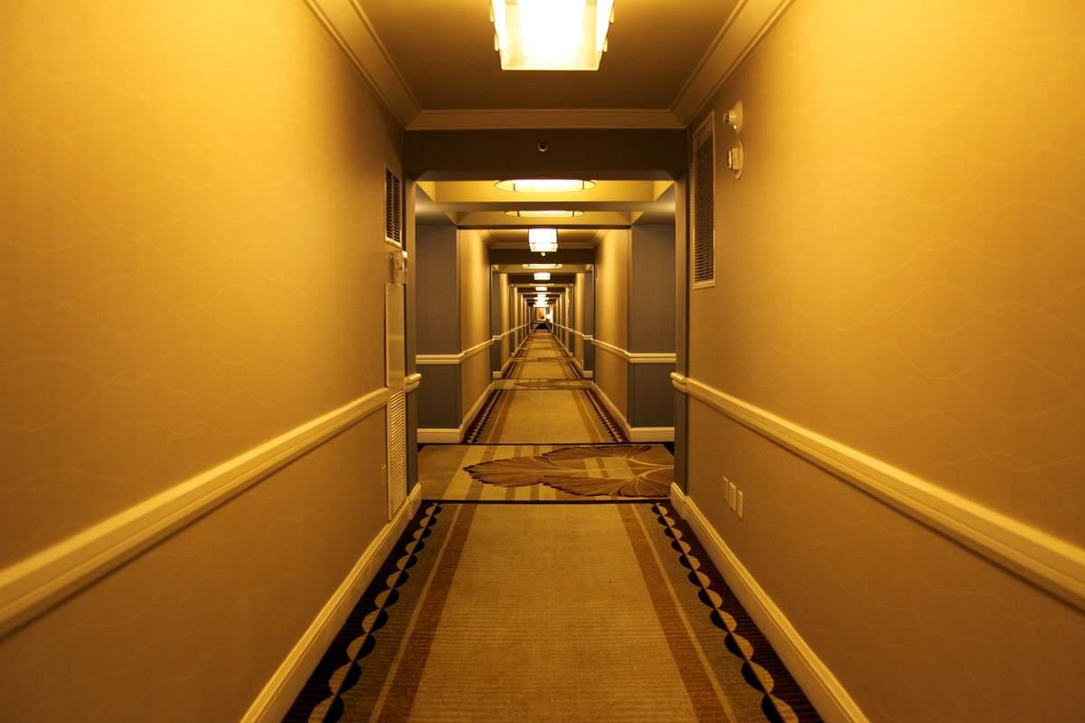 The Hallway Of Life Noble Stallion