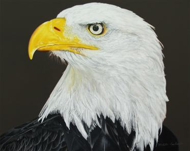 Nikita Coulombe-Eagle Calling low res